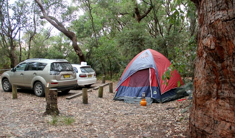 Aragunnu campground, Mimosa Rocks National Park. Photo: John Yurasek Copyright: NSW Government