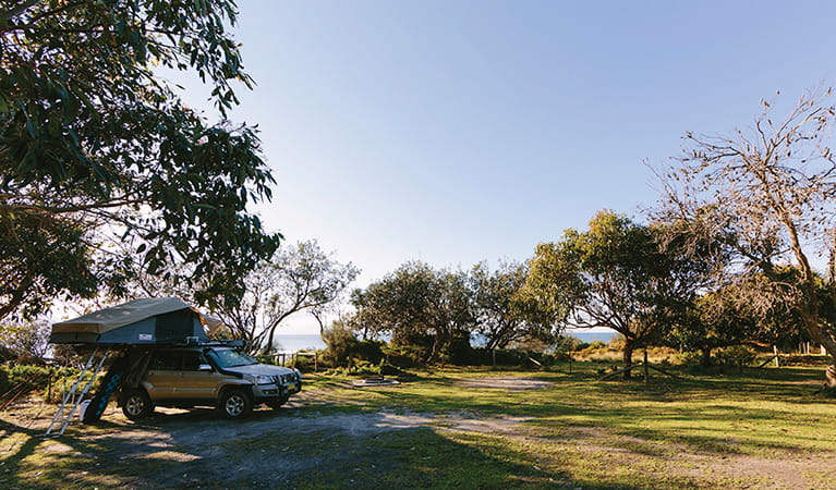 A car with roof top tent parked under a tree at Gillards campground, Mimosa Rocks National Park. Photo: David Finnegan/DPIE