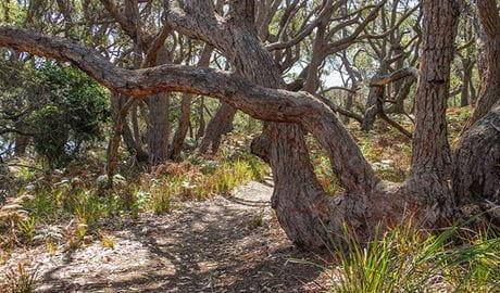 Middle Lagoon walking track, Mimosa Rocks National Park. Photo: John Yurasek