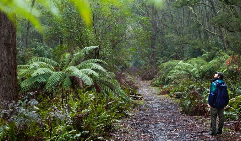 Corn Trail walking track path, Monga National Park. Photo: Lucas Boyd