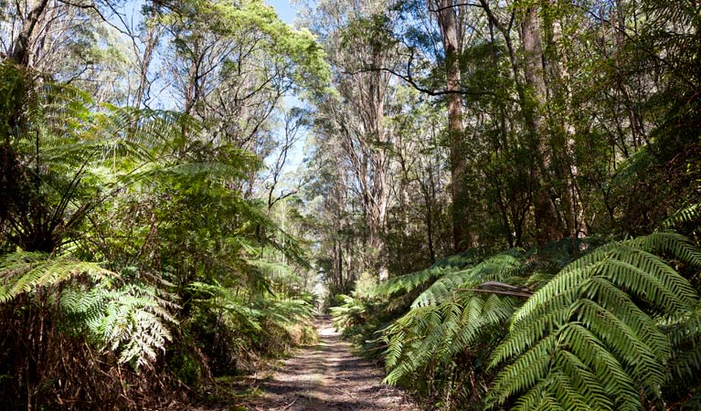 Corn Trail walking track, Monga National Park. Photo: Lucas Boyd