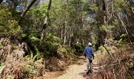 Corn Trail walking track route, Monga National Park. Photo: Lucas Boyd