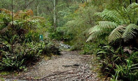 Dasyurus picnic area, Monga National Park. Photo: Lucas Boyd