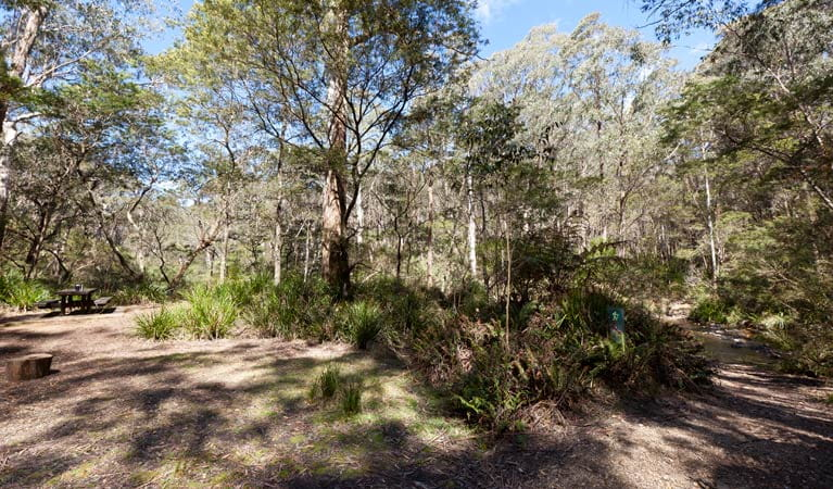 Dasyurus picnic area landscape, Monga National Park. Photo: Lucas Boyd