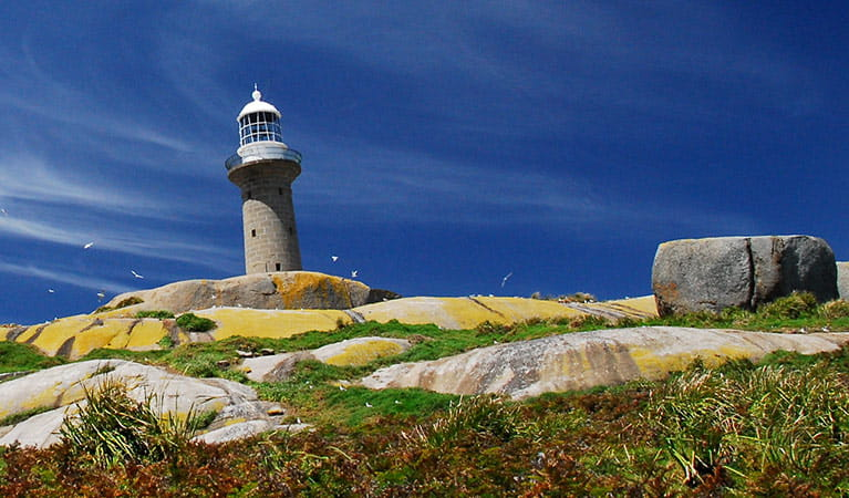 View of Montague Island Lighthouse perched among rocks on Montague Island Nature Reserve. Photo: Stuart Cohen/OEH