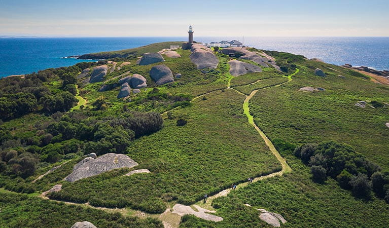 Aerial view of walking track and lighthouse at Montague Island Nature Reserve. Photo: Daniel Tran/OEH