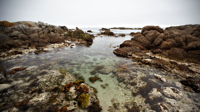Rock pool, Montague Island Nature Reserve. Photo: Mike Rossi