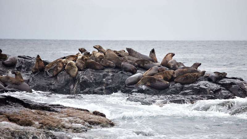 Seals, Montague Island Nature Reserve. Photo: Mike Rossi