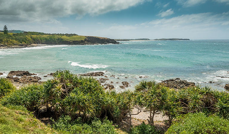 Look at me Now Headland walk, Moonee Beach Nature Reserve. Photo: David Young