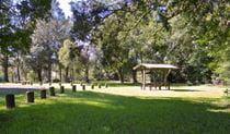 Moore Park picnic area, Moore Park Nature Reserve. Photo: OEH