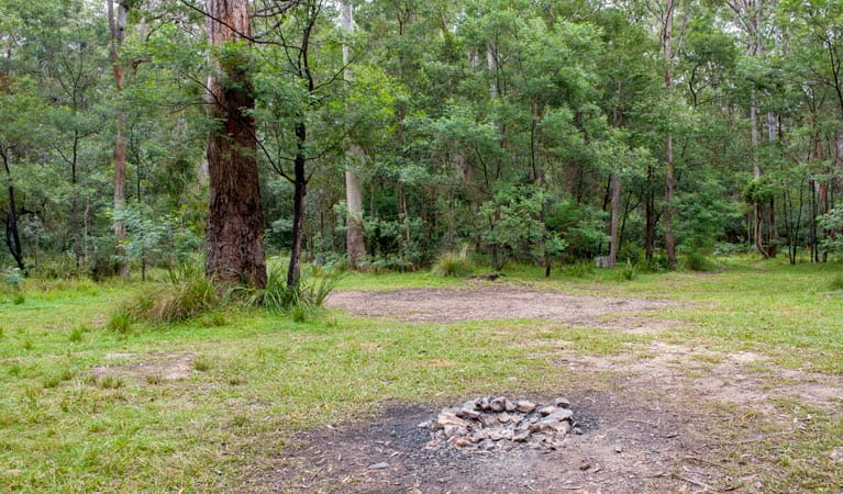 Blue Gum Flat campground, Morton National Park. Photo: Michael van Ewijk/NSW Government
