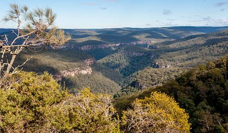 View from Beauchamp Cliffs lookout past scrub vegetation to Morton National Park wilderness. Photo: Michael Van Ewijk © DPIE.