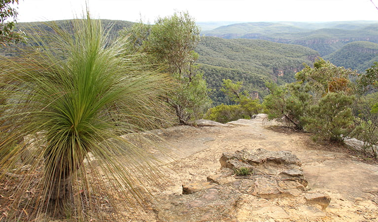 Wilderness beyond Bonnie View lookout, with a grass tree and rock ledge in the foreground. Photo: John Yurasek/DPIE.