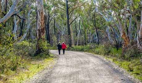 Bundanoon Creek walking track, Morton National Park. Photo: Michael Van Ewijk