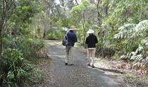 The walk to Fitzroy Falls, Morton National Park. Photo: Beth Boughton/NSW Government
