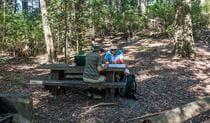 George Boyd picnic area, Morton National Park. Photo: Michael Van Ewijk