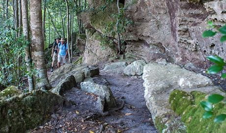 George Boyd Rainforest walking track, Morton National Park. Photo: Michael Van Ewijk