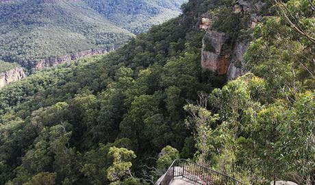 View of Grand Canyon lookout platform on sandstone cliffs above a densely forested valley. Photo: John Yurasek/OEH.