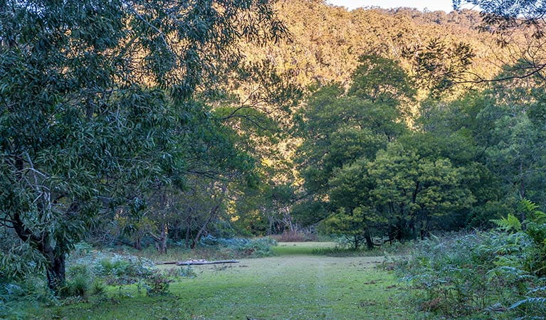 Griffins walking track, Morton National Park. Photo: Michael Van Ewijk