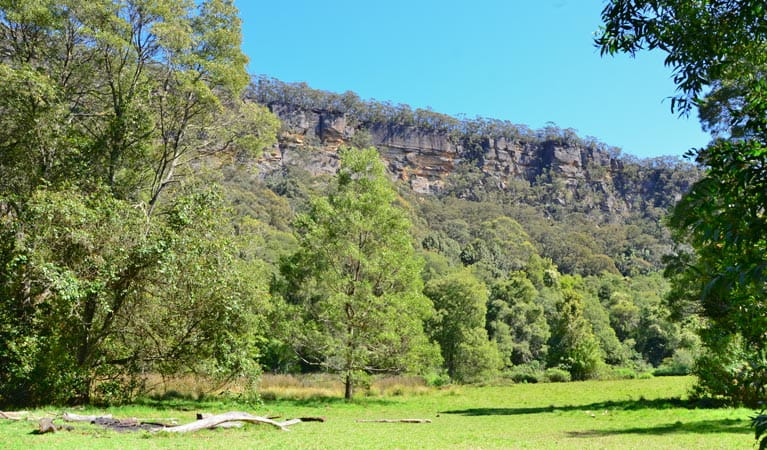 Griffins walking track, Morton National Park. Photo: J Devereaux