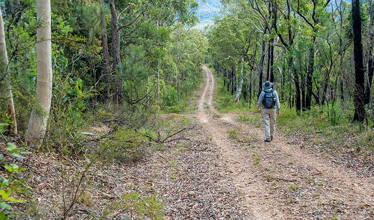 Kangaroo River walking track, Morton National Park. Photo: Michael Van Ewijk