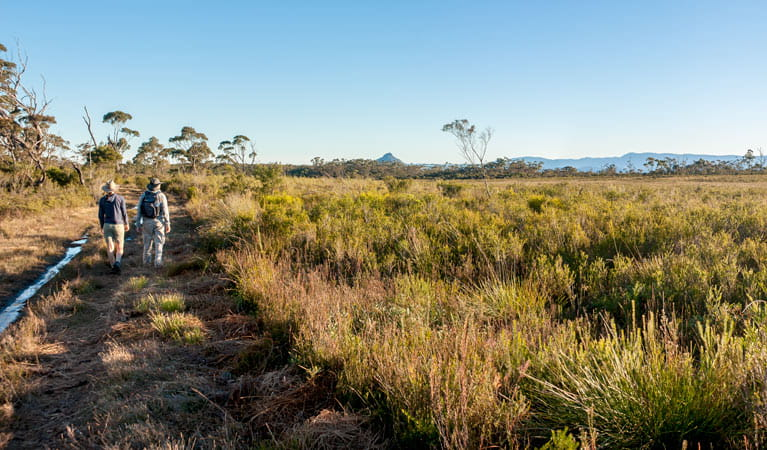 Little Forest walking track, Morton National Park. Photo: Michael van Ewijk