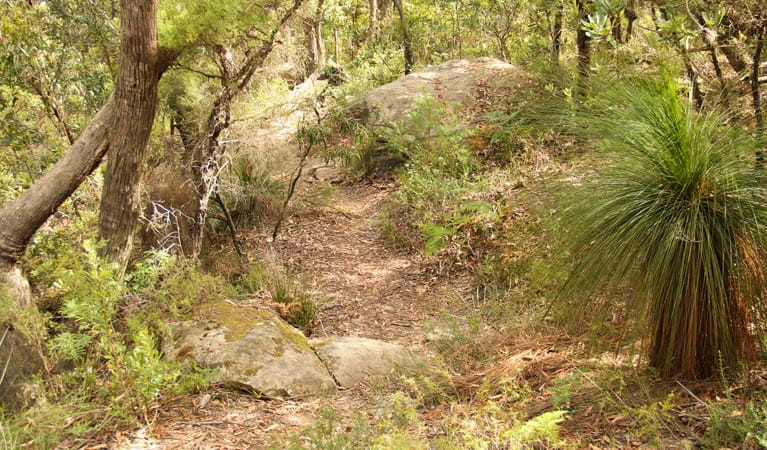 Mount Carnavon walking track, Morton National Park. Photo: John Yurasek