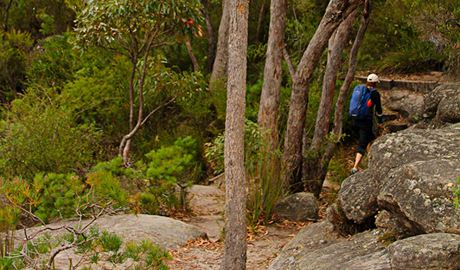 Pigeon House Didthul walking track. Photo: John Yurasek Copyright:NSW Government