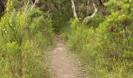 Three Views walking track. Photo: John Yurasek