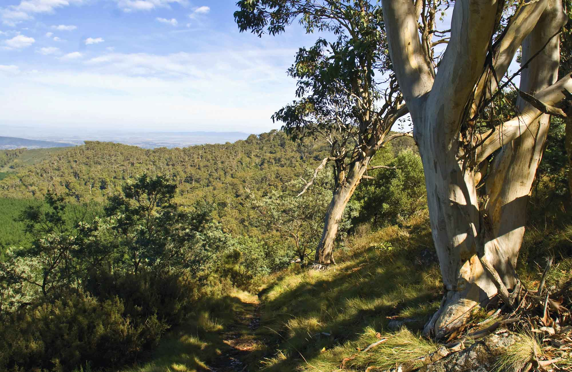 Landscape in Mount Canobolas State Conservation Area. Photo: Boris Hlavica