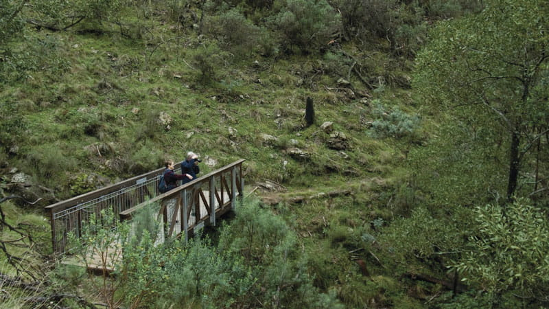 People on a foot bridge in Mount Canobolas State Conservation Area. Photo Debby McGerty