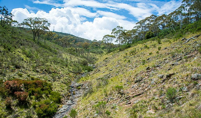 Hopetoun Falls walking track, Mount Canobolas State Conservation Area. Photo: Steve Woodhall