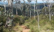 Mount Towac track, Mount Canobolas State Conservation Area. Photo: Debby McGerty Copyright:NSW Government