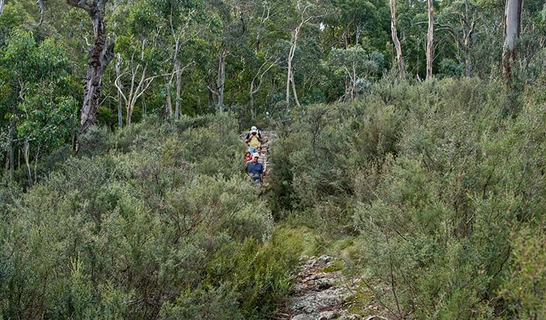 Nature walking track, Mount Canobolas State Conservation Area. Photo: Boris Hlavica