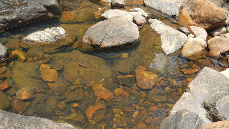 Rock pool in the river, Mount Canobolas State Conservation Area. Photo Debby McGerty