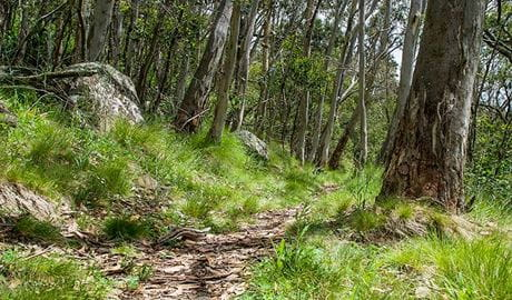 Spring Glade walking track, Mount Canobolas State Conservation Area. Photo: Steve Woodhall