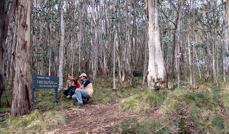 Summits walking track, Mount Canobolas State Conservation Area. Photo: Boris Hlavica