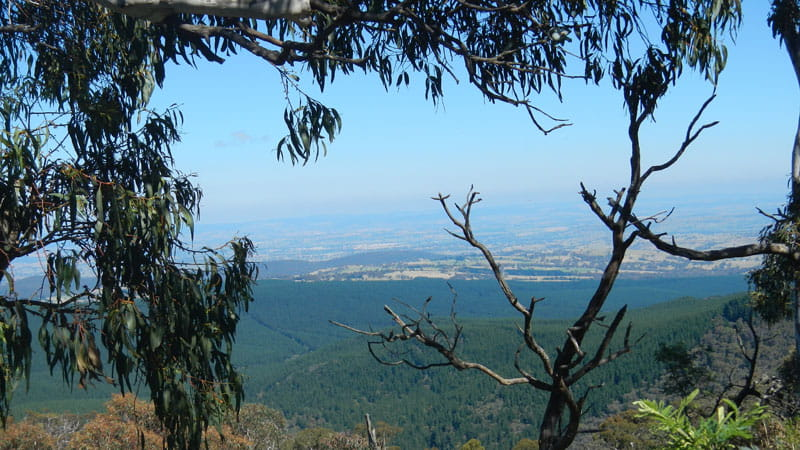 View of Mount Canobolas State Conservation Area through the trees. Photo Debby McGerty