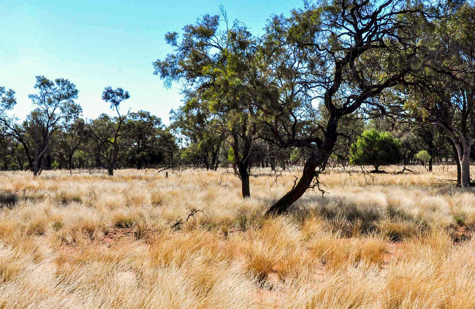Mount Grenfell Historic Site. Photo: NSW Government
