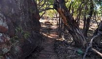 Art site walk, Mount Grenfell Historic Site. Photo: NSW Government