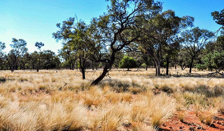 Mount Grenfell Historic Site. Photo: Jenna Hore