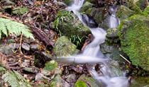 Water stream over moss-covered rocks, Mount Hyland Nature Reserve. Photo: M Price