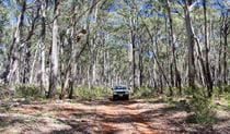 Barraba Track, Mount Kaputar National Park. Photo: Jessica Stokes
