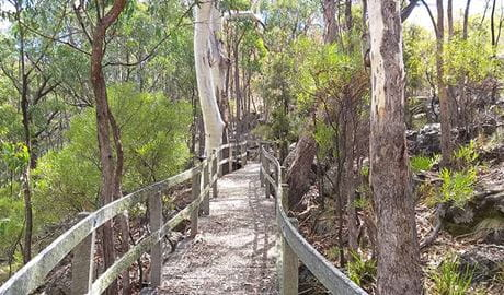 Timber boardwalk along Dawsons Spring nature trail, Mount Kaputar National Park. Photo: Fiona Gray/OEH