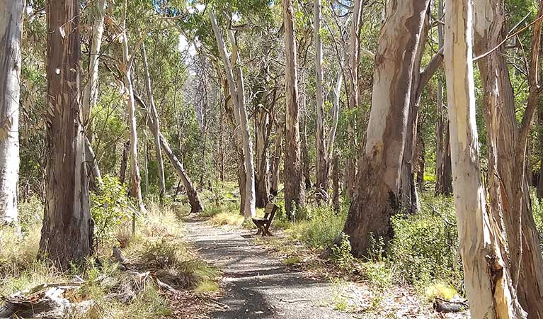 A sealed pathway section of Dawsons Spring nature trail, Mount Kaputar National Park. Photo: Fiona Gray/OEH