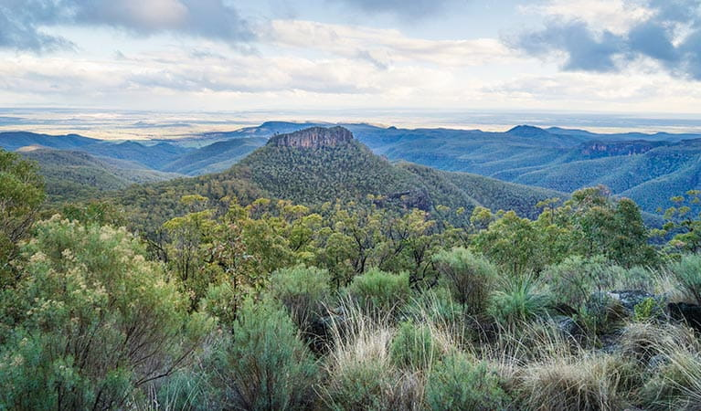View of the Warrumbungles from Doug Sky lookout in Mount Kaputar National Park. Photo: Simone Cottrell/OEH
