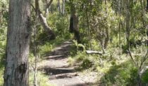 Euglah Rock walking track, Mount Kaputar National Park. Photo: Jessica Stokes