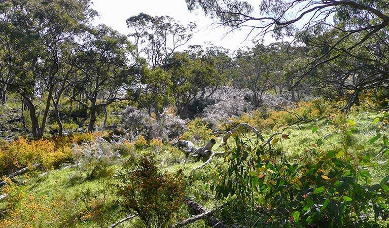 Kaputar Plateau walk, Mount Kaputar National Park. Photo: Jessica Stokes