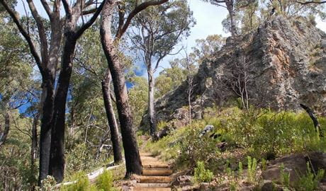 Mount Coryah walking track, Mount Kaputar National Park. Photo: Ian Smith