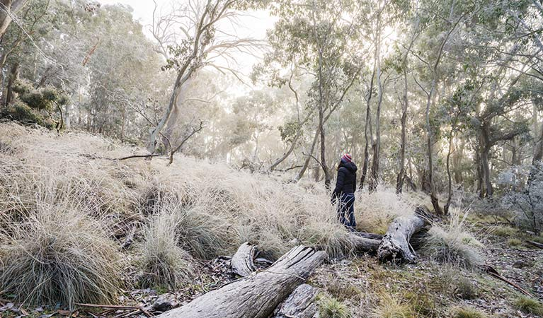 A light dusting of snow lines the vegetation at Mount Kaputar near Eckfords carpark. Photo: Simone Cottrell/OEH